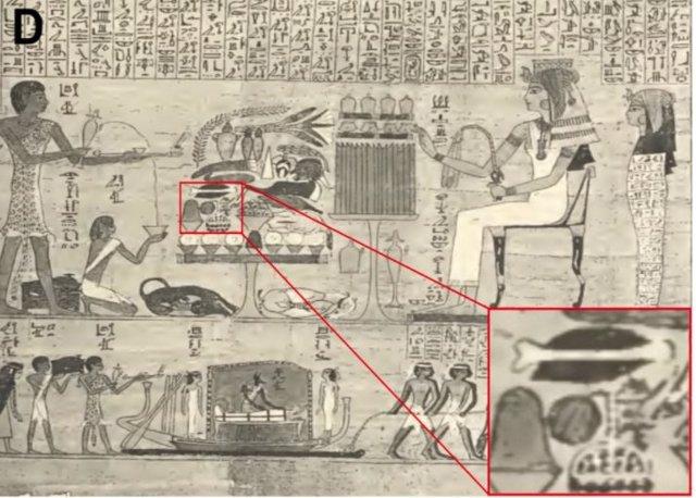 En el recuadro, una pintura muestra las distintivas rayas de una fruta parecida a una sandía.