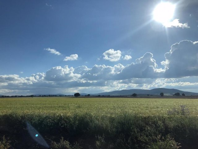 Campo. Agricultura.