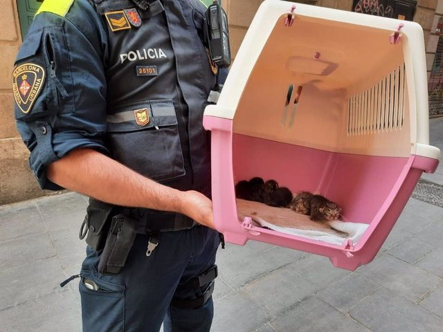 Imatge d'un agent de la Guàrdia Urbana amb alguns dels animals intervinguts a Barcelona.