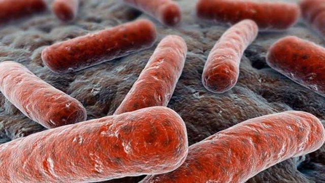 Recreación de la bacteria Mycobacterium tuberculosis que causa la infección pulmonar