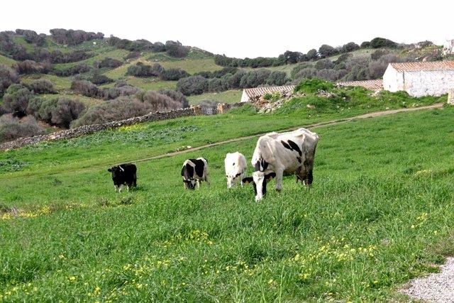 Campo con vacas.