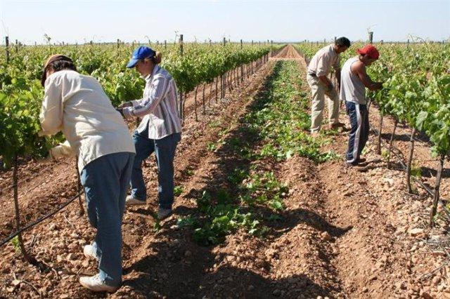 Archivo - Agricultores trabajando en el campo
