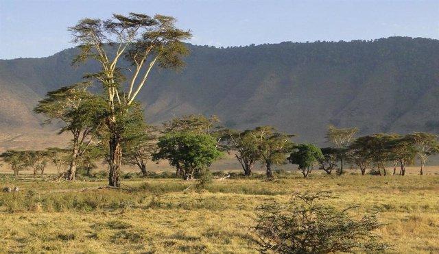 El Ngorongoro en el borde del Serengeti en Tanzania es el hogar de una abundante vida silvestre. Sin embargo, el cambio climático conduce a una dramática escasez de agua, cambios en vegetación y pérdida de biodiversidad que amenazan el frágil ecosistema
