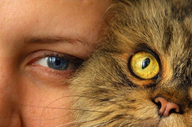 Cinco categorías en la relación entre gato y dueño