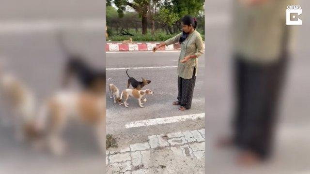 Esta mujer alimenta a los perros callejeros de su localidad todos los días