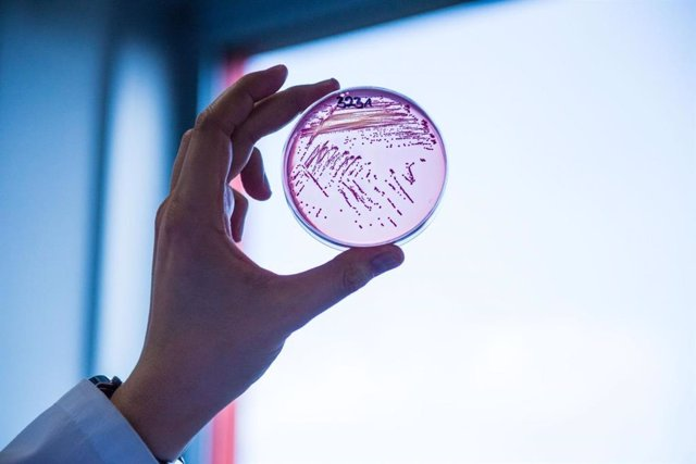 Archivo - Bacteria E. Coli resistente a múltiples fármacos