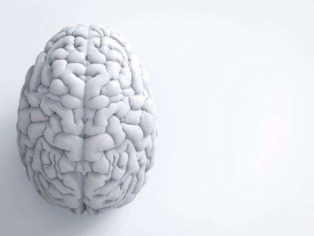 Archivo - White human brain