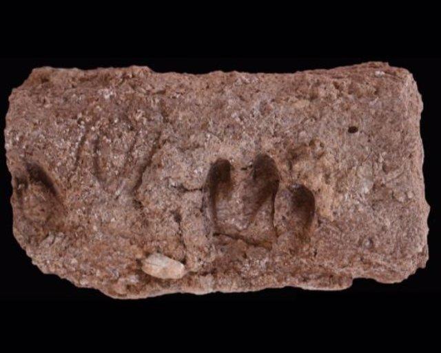Sangría de varios cascos de cabra en un ladrillo del sitio arqueológico de Ganj Dareh.