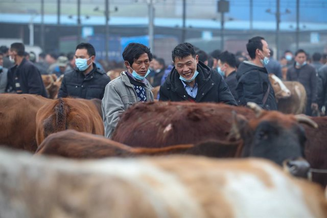 Archivo - 04 March 2021, China, Fenggang: People look at cows as over 1200 cows are being sold in the livestock market in Fenggang. Photo: -/TPG via ZUMA Press/dpa