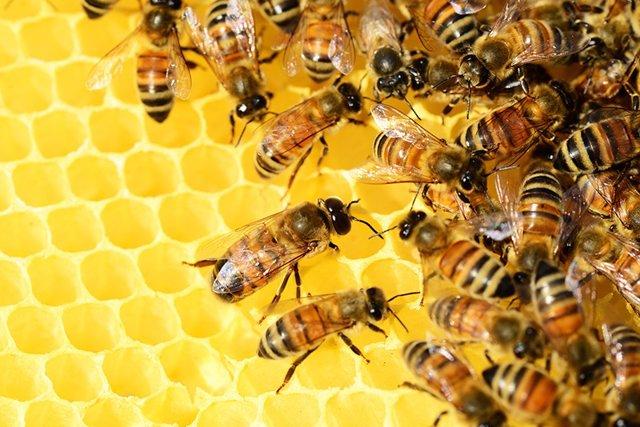 Archivo - Colemna de abejas