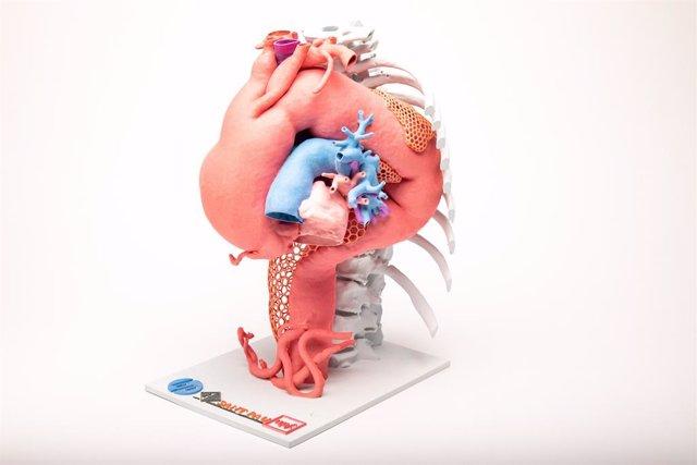 Arxiu - L'exposició '3D Innovació en Medicina' recull una sèrie de peces impreses en 3D que s'apliquen a la pràctica assistencial.