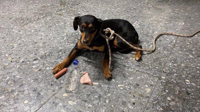 Rescatado vivo un perro de la carrocería de un coche