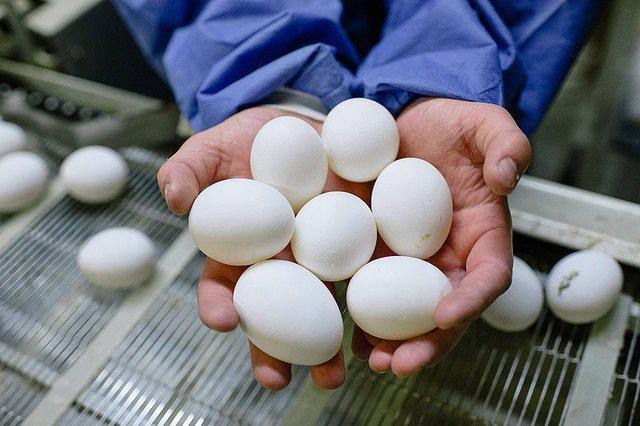 Archivo - Huevos