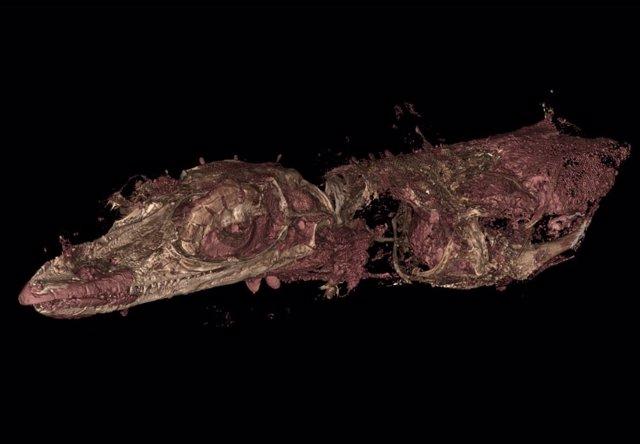 Aspecto de la nueva especie de lagarto ancestral