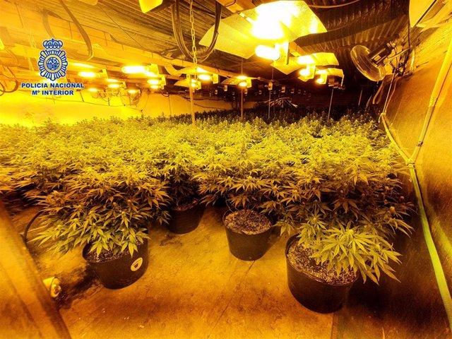 Policía Nacional desmantela una nave industrial en Alcantarilla que albergaba cuatro cultivos indoor de marihuana