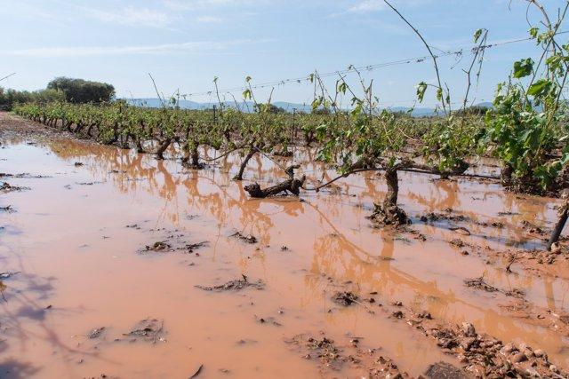 Las viñas de Fuenmayor afectadas por las tormentas dle lunes