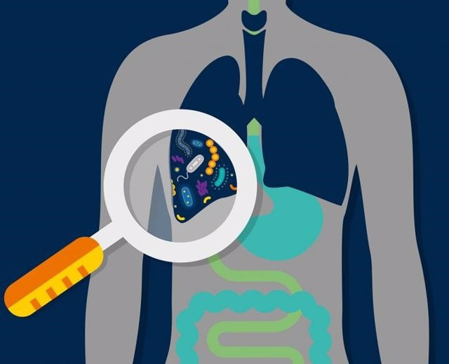 Archivo - Microbioma pulmonar, bacterias, pulmones