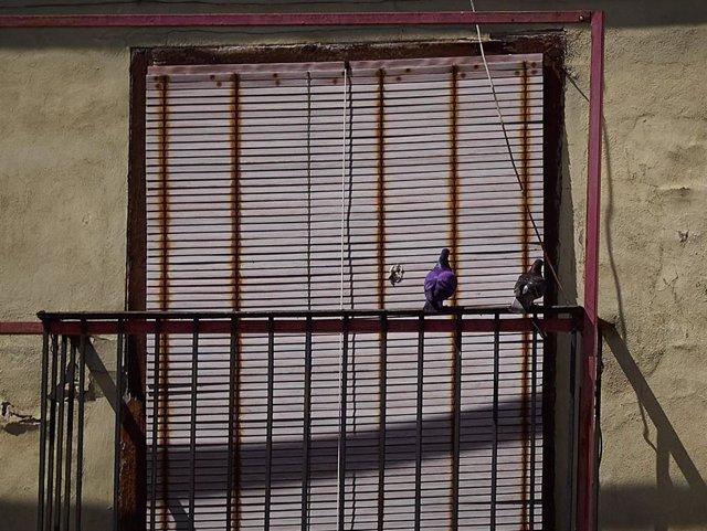 Archivo - Unas palomas se posan en la barandilla de un balcón en la Plaza del Castillo de Pamplona
