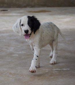 Leo, perro abandonado