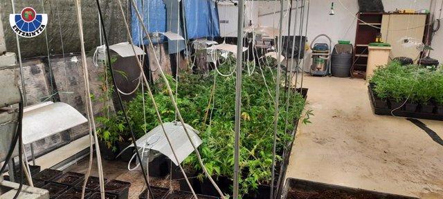 Plantación de marihuana desmantelada en Bilbao