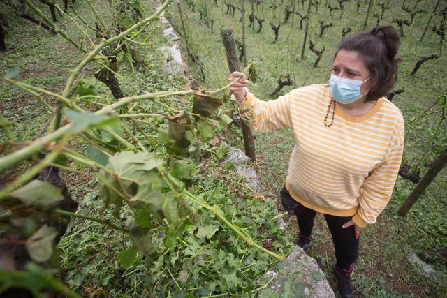 Una de las propietaria de Adega Amedo, bodega incluida en la D.O. Ribeira Sacra, Lorena Amedo, muestra los sarmientos rotos y las cepas destrozadas en la viña de su propiedad por la fuerte granizada