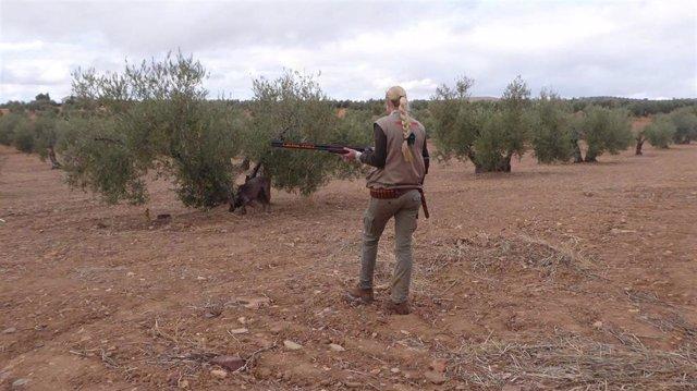 Archivo - Asaja alude a didicultades de los cazadores para paliar los daños cinegéticos
