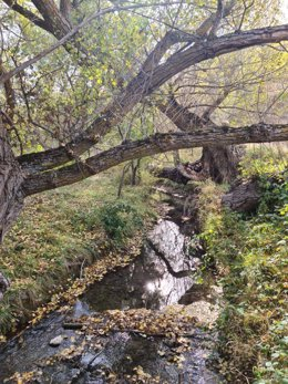 Un rincón del entorno natural de Camarena de la Sierra, que ha anunciado su adhesión a l ainiciativa internacional Corredor Biológico Mundial.