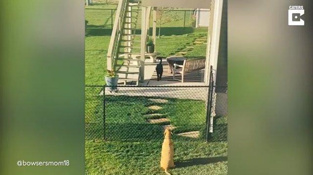 Estos perros son vecinos y mejores amigos de valla
