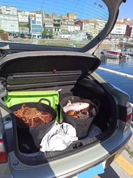 Dos capazos con marisco y pescado intervenido en operativo contra furtuvismo en Fisterra (A Coruña).
