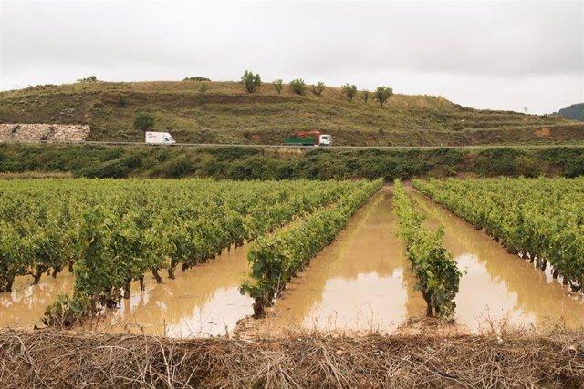 Viñedos inundados tras el paso de la fuerte tormenta, en el municipio de Briones, a 17 de junio de 2021, en La Rioja (España).
