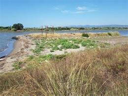 Franja de sediments entre l'illa del Molí i el marge esquerre del riu Llobregat