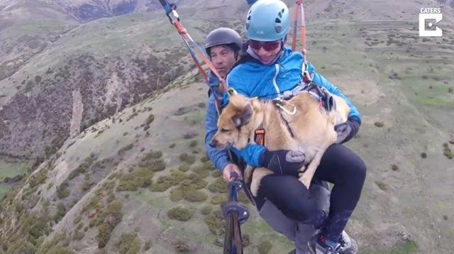 Este perro surca los cielos a más de 8.000 pies de altura acompañado de sus dueños