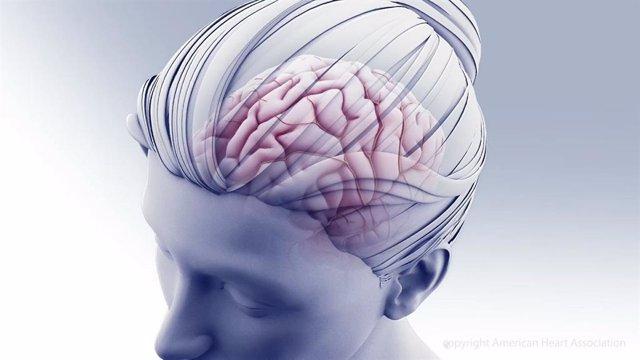Archivo - Ilustración del cerebro