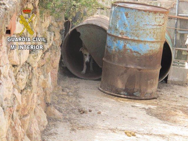Uno de los perros localizados en Moratilla de Henares cuyo dueño incumplía la legislación de bienestar animal