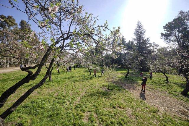 Archivo - Almendros en flor en el parque de la Quinta de los Molinos, en Madrid (España), a 28 de febrero de 2021. El pasado 20 de febrero el Ayuntamiento de Madrid reabrió parcialmente este parque después de verse afectado a consecuencia del temporal 'Fi