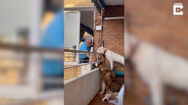 Cada mañana, este hombre de 84 años da de comer a los perros de su vecina en un conmovedor gesto que se ha hecho viral
