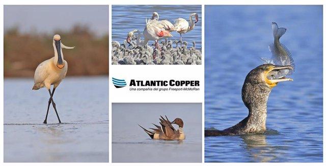 Imagénes ganadoras en un concurso fotográfico a nivel internacional de Atlantic Copper.