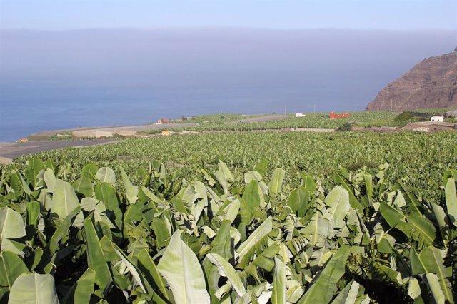 Finca de plataneras en Canarias