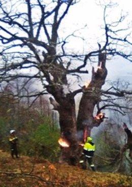 Archivo - Bomberos forestales en servicio