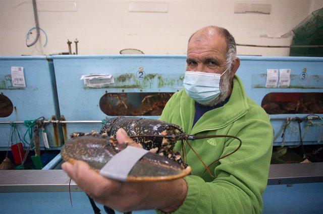 Archivo - Un pescador jubilado y patrón del Costa de África muestra un bogavante de 7 kilos antes de vender el género en la Lonja de Burela, Lugo, Galicia (España), a 18 de diciembre de 2020. El pasado 30 de noviembre comenzó la campaña extractiva de la c