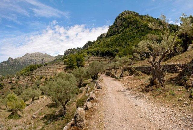 Archivo - Un camino de la Serra de Tramuntana.