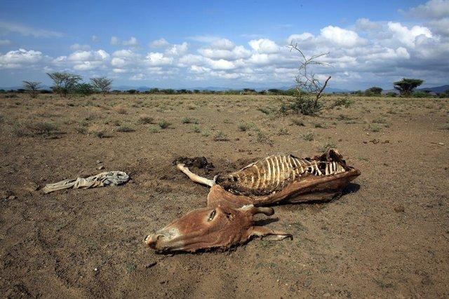 Archivo - Efectos de la sequía de 2009 en Kenia