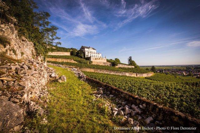 Château Gris, Maison Albert Bichot