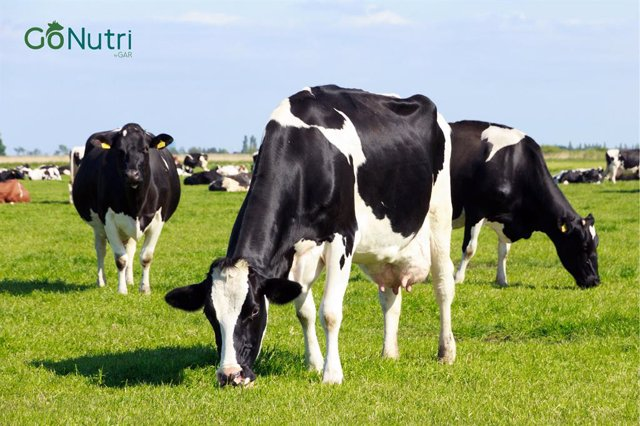 GoNutri is a brand helping farmers with animal nutrition through livestock feed supplements produced from sustainably-sourced palm and palm kernel oil.