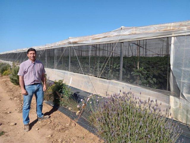 Aurelio Samper, agricultor del Campo de Cartagena