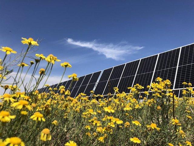 Detalle de paneles solares