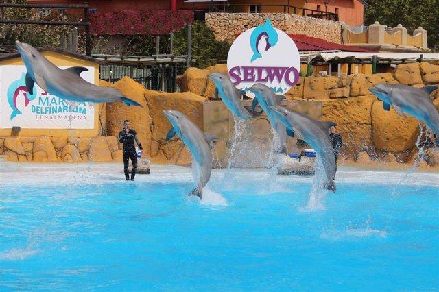 Archivo - Selwo Marina delfines turistas ocio parques reunidos agua verano