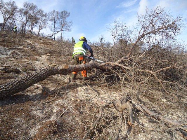 Archivo - Trabajos tras el incendio de Quesada en 2015
