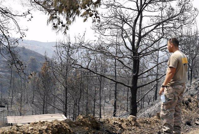 Zona forestal destruida en el distrito de Larnaca, en Chipre