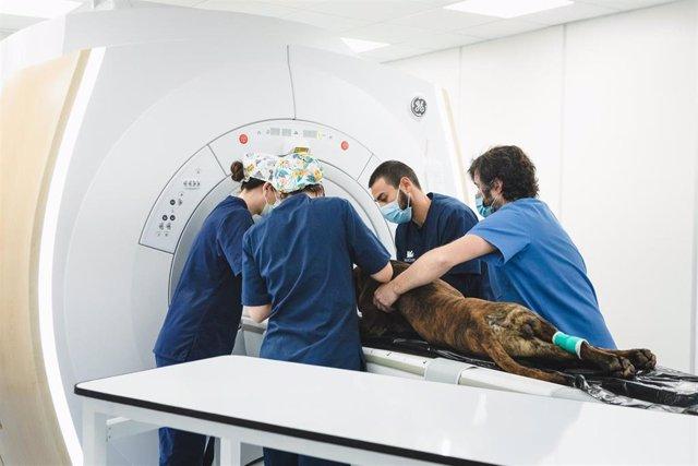 Archivo - El Hospital Veterinario AniCura Valencia Sur incorpora un nuevo sistema de resonancia magnética nuclear que puede mejorar y acelerar el diagnóstico de patologías neurológicas y lesiones en tejidos blandos, como los ligamentos, en todo tipo de an